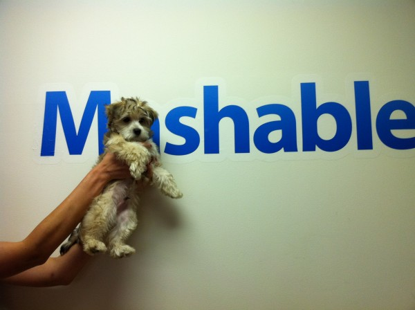 Mashable Logo With Dog